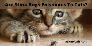 Are Stink Bugs Poisonous To Cats? Can Cats Eat Stink Bugs?