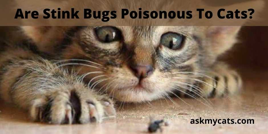 Are Stink Bugs Poisonous To Cats?