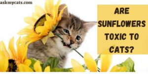 Are Sunflowers Toxic To Cats? Can Cats Eat Sunflower Petals?
