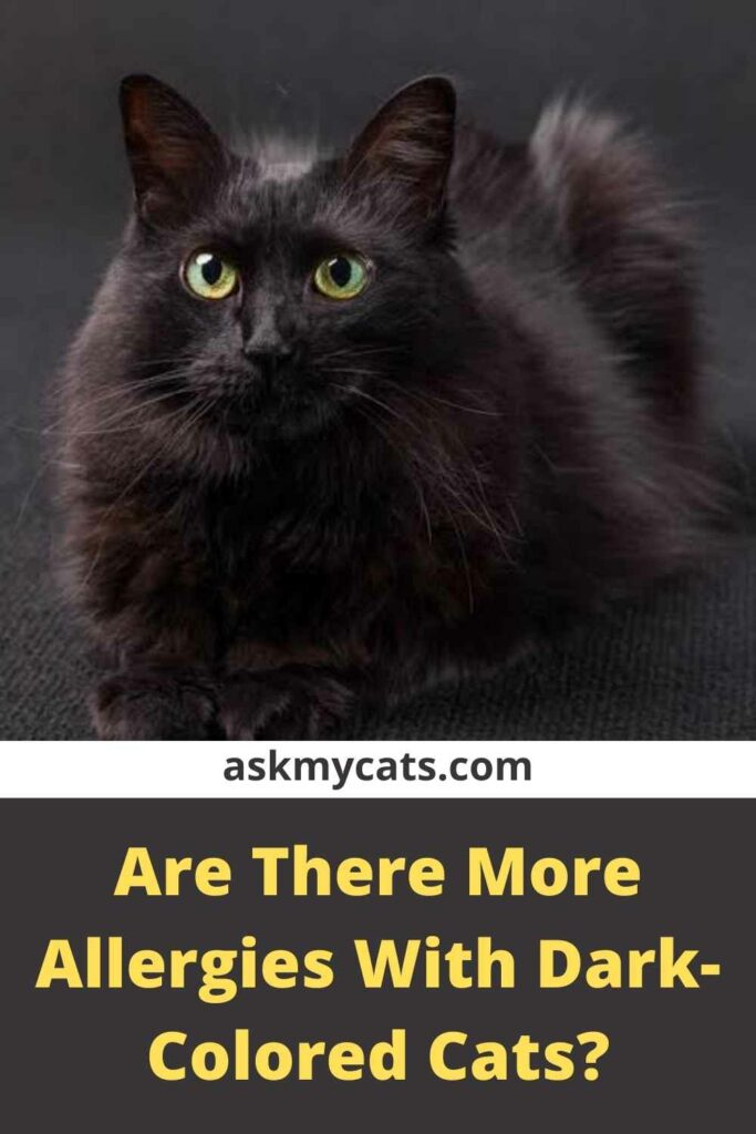 Are There More Allergies With Dark-Colored Cats?