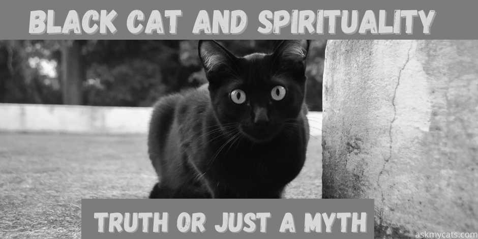 black cat and spirituality- truth or just a dare.