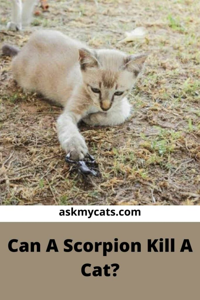 Can A Scorpion Kill A Cat?