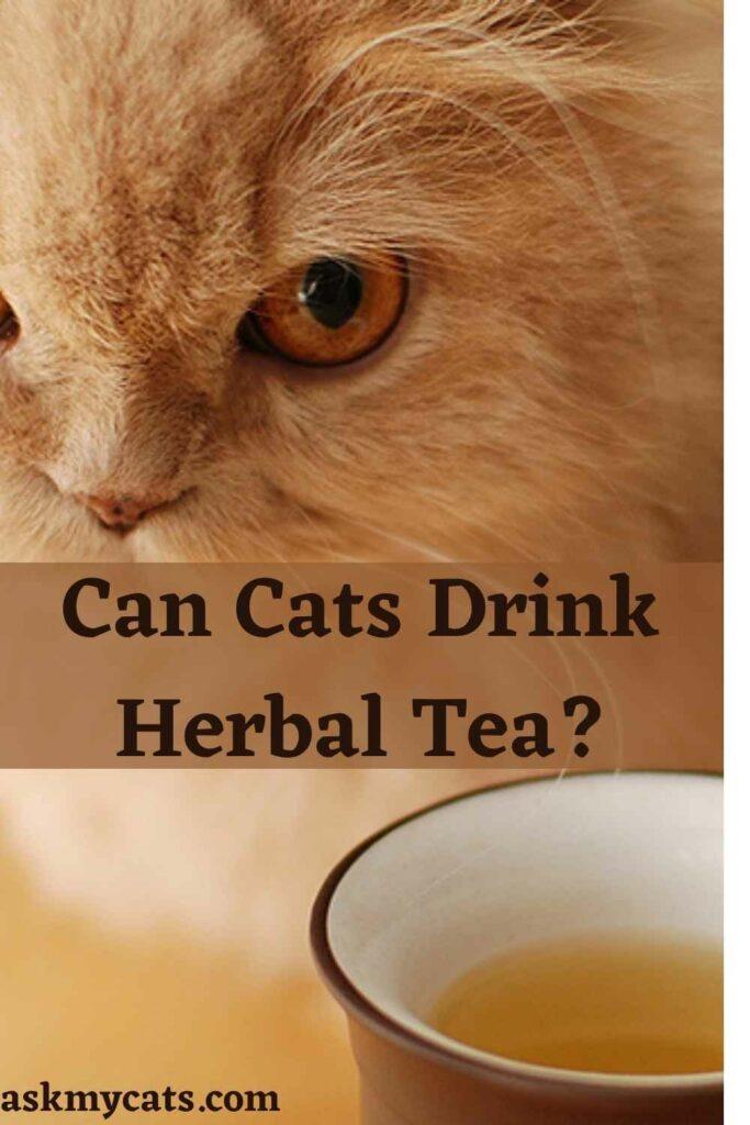 Can Cats Drink Herbal Tea?