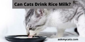 Can Cats Drink Rice Milk? What Are The Alternatives To Rice Milk?