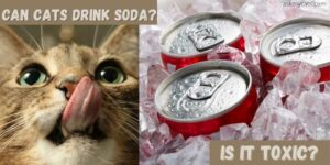 Can Cats Drink Soda? What Should I Do If My Cat Drinks Soda?