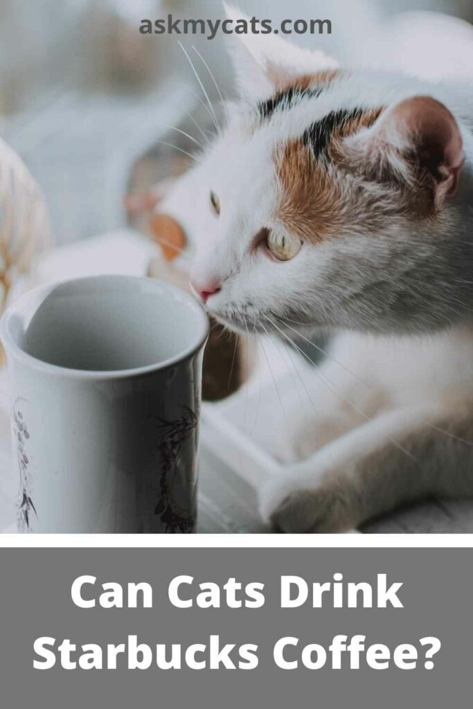 Can Cats Drink Starbucks Coffee?