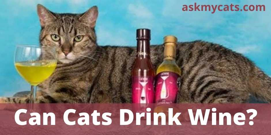Can Cats Drink Wine?
