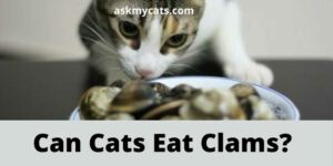 Can Cats Eat Clams? Are Clams Good For Cats?