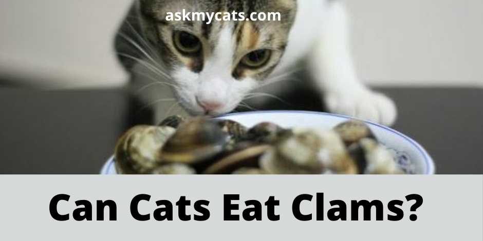 Can Cats Eat Clams?
