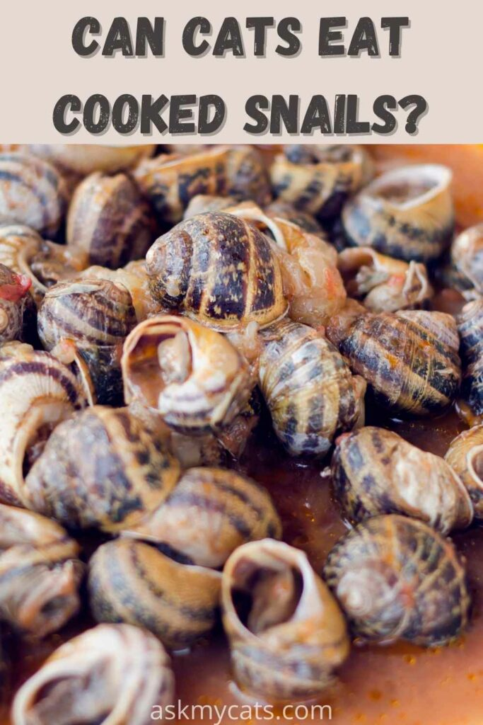 can cats cooked snails?