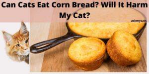 Can Cats Eat Corn Bread? Will It Harm My Cat?