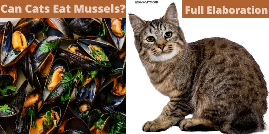 can cats eat mussels? full elaboration