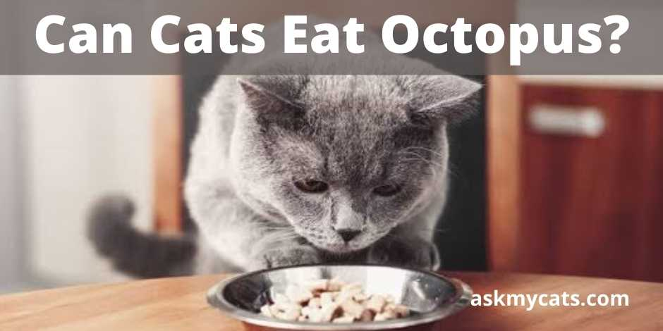 Can Cats Eat Octopus