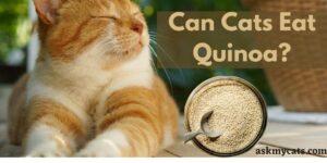 Can Cats Eat Quinoa? Is Quinoa Safe For Cats?