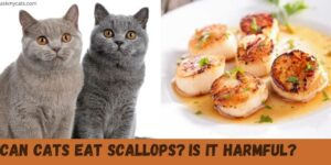 Can Cats Eat Scallops? Are Scallops Safe For Cats?