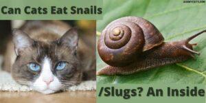 Can Cats Eat Snails/Slugs? Can Snails Kill Cats?