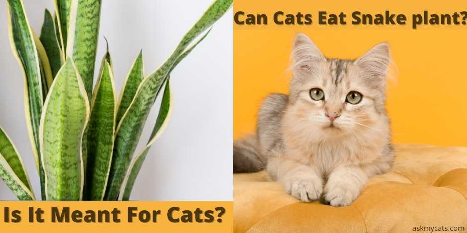 """can cats eat snake plant?"""""""