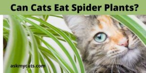 Can Cats Eat Spider Plants? Are Spider Plants Poisonous To Cats?