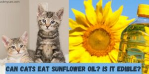Can Cats Eat Sunflower Oil? Is Sunflower Oil Toxic To Cats?