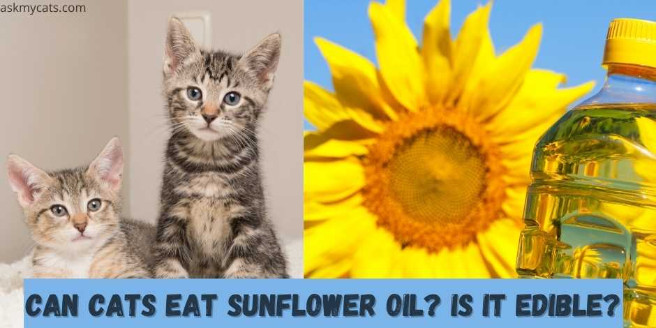 can cats eat sunflower oil? is it edible?