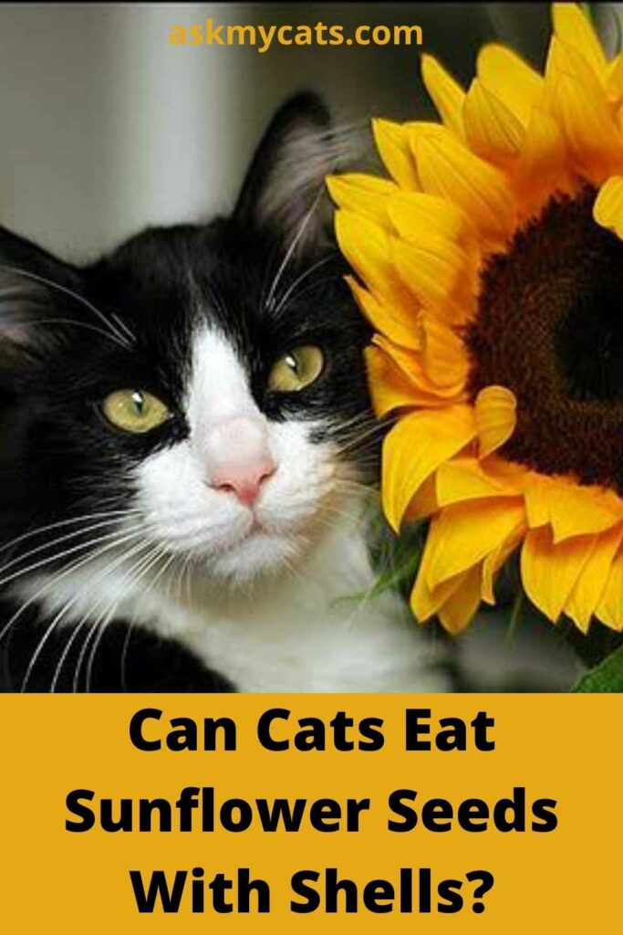 Can Cats Eat Sunflower Seeds With Shells?