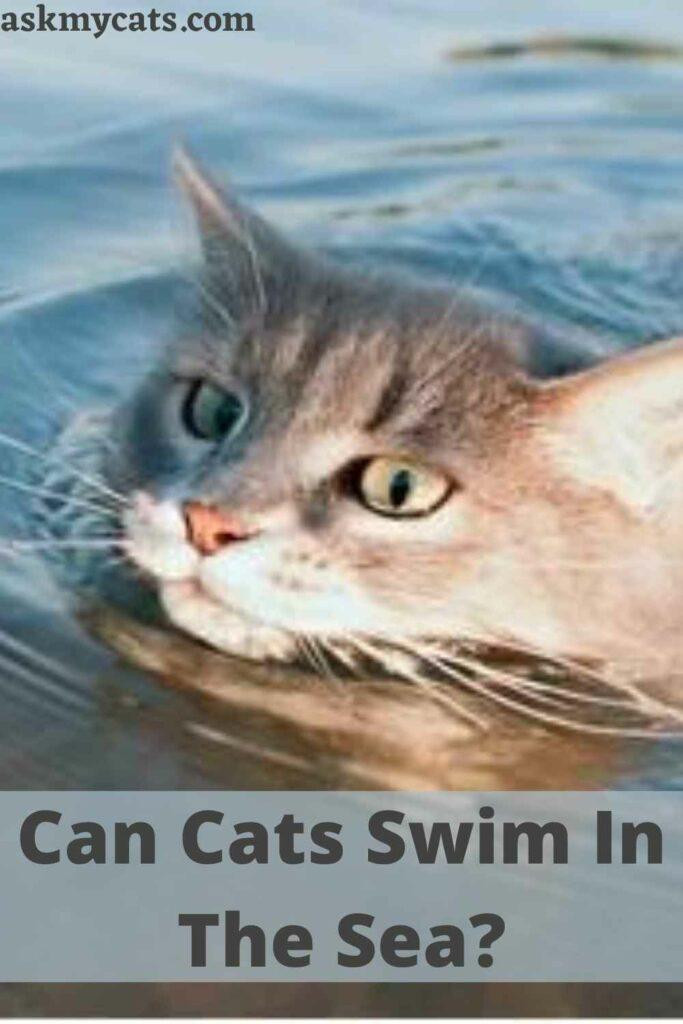 Can Cats Swim In The Sea?
