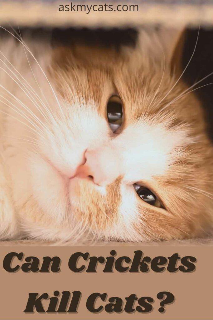 can crickets kill cats?
