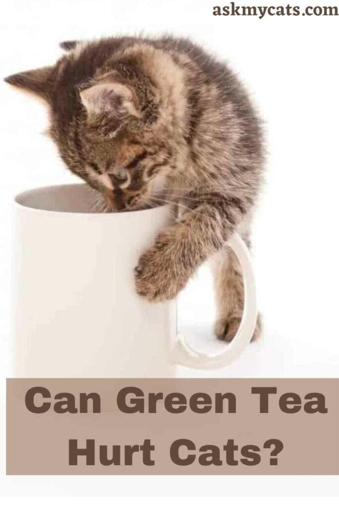 Can Green Tea Hurt Cats?