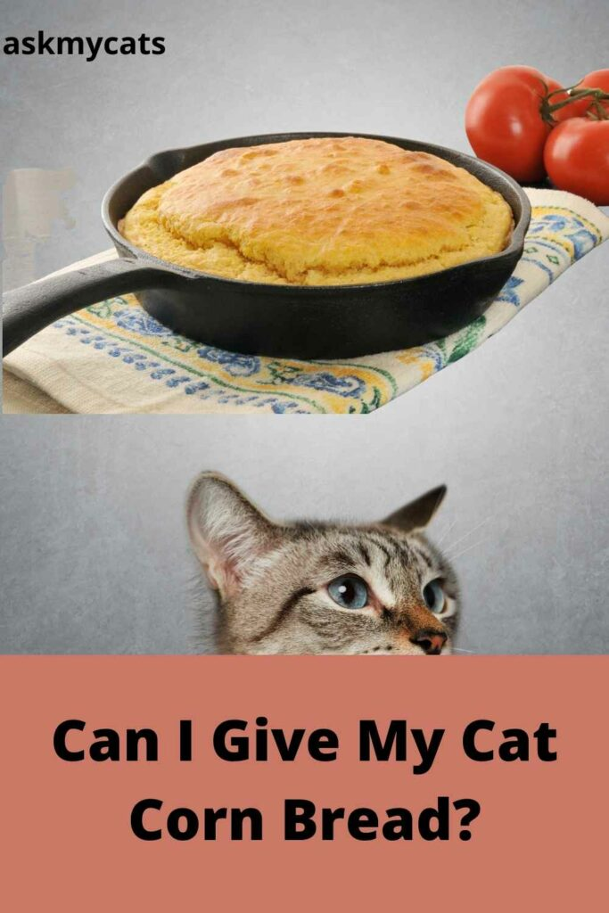 Can I Give My Cat Corn Bread?