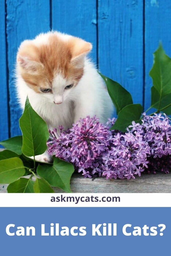 Can Lilacs Kill Cats?