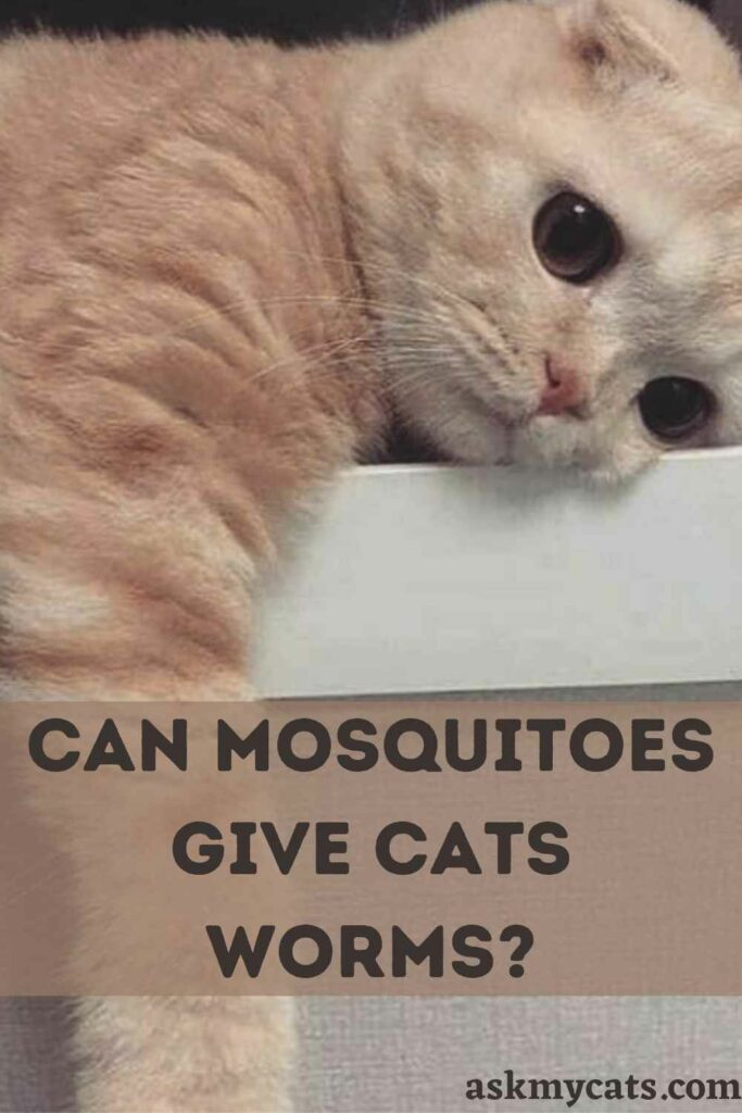 Can Mosquitoes Give Cats Worms?