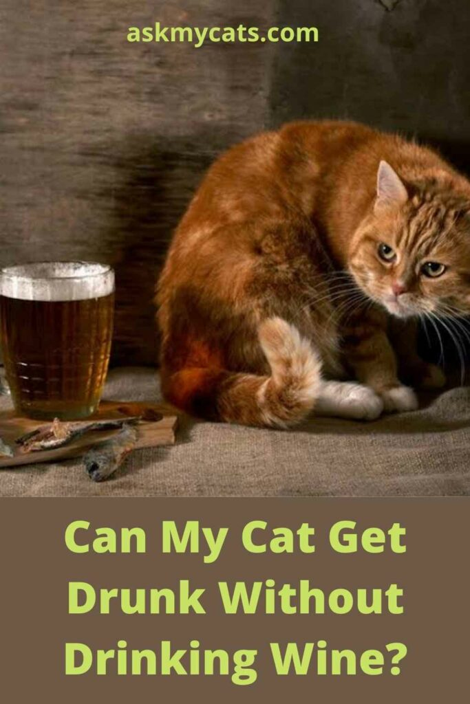 Can My Cat Get Drunk Without Drinking Wine?
