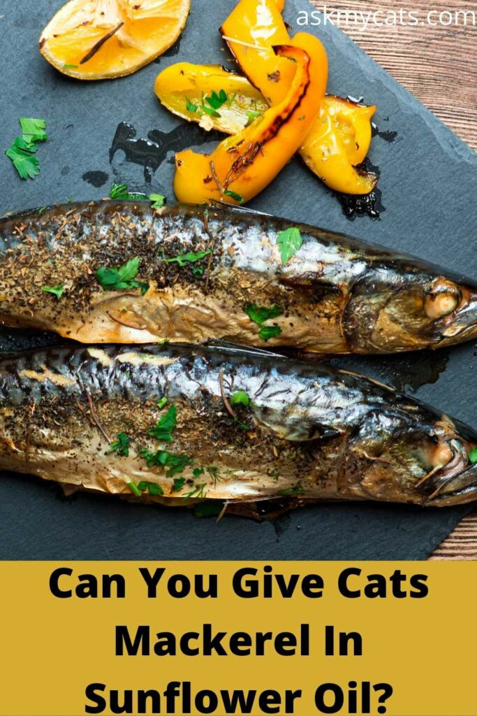 can you give cats mackerel in sunflower oil?