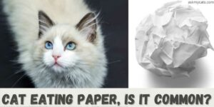 Why Does My Cat Eats Paper? Is Paper Safe For Cats?