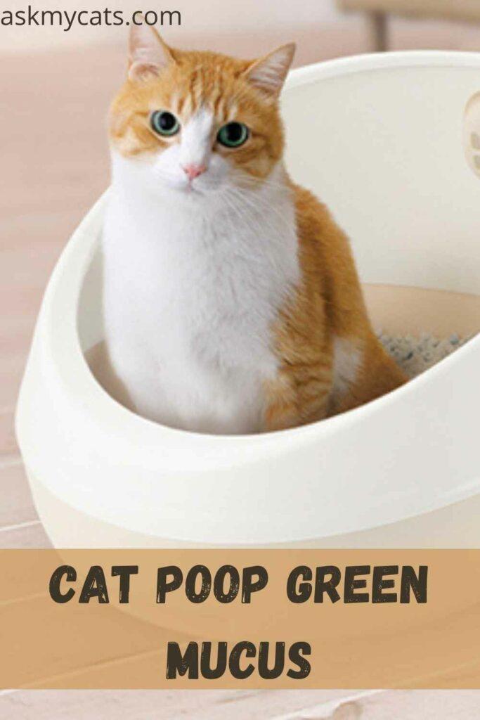 Cat Poop Green Mucus