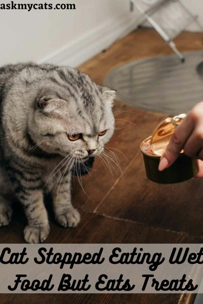 Cat Stopped Eating Wet Food But Eats Treats
