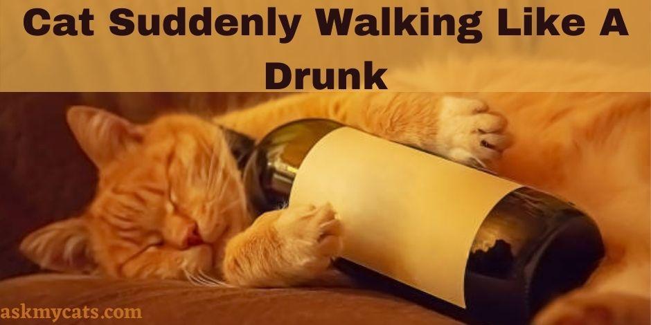 Cat Suddenly Walking Like A Drunk