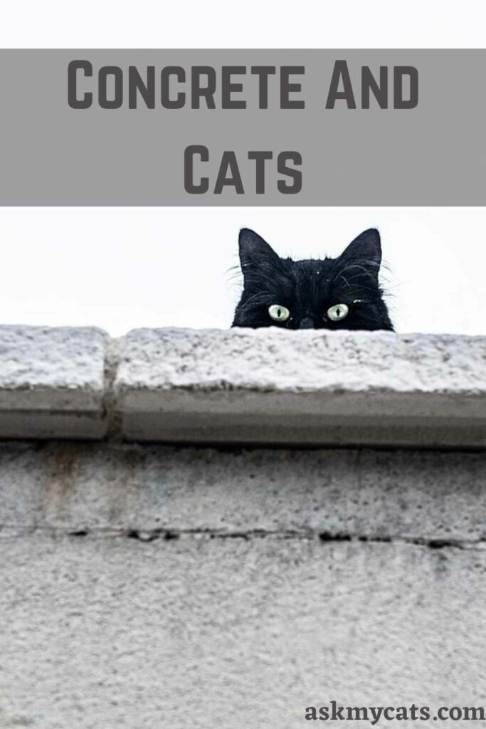Concrete And Cats