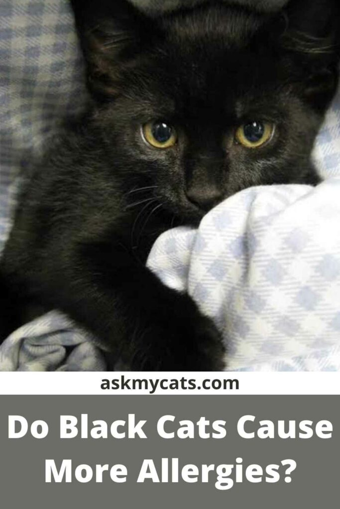 Do Black Cats Cause More Allergies?