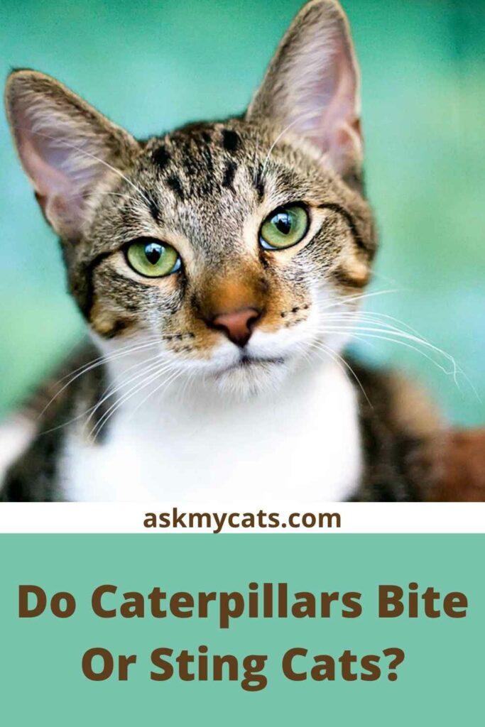 Do Caterpillars Bite Or Sting Cats?
