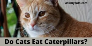 Do Cats Eat Caterpillars? Are Caterpillars Poisonous To Cats?