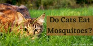 Do Cats Eat Mosquitoes? Is It Ok For A Cat To Eat A Mosquito?