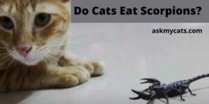 Do Cats Eat Scorpions? Can A Scorpion Kill A Cat?