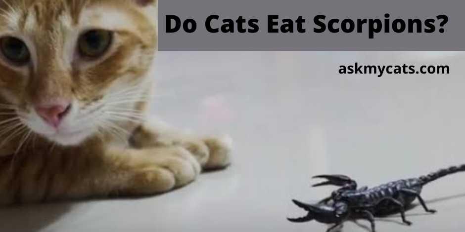 Do Cats Eat Scorpions?