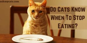 Do Cats Know When To Stop Eating? Can Cats Control Their Eating?