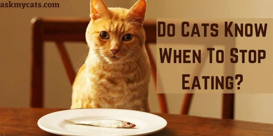 Do Cats Know When To Stop Eating?