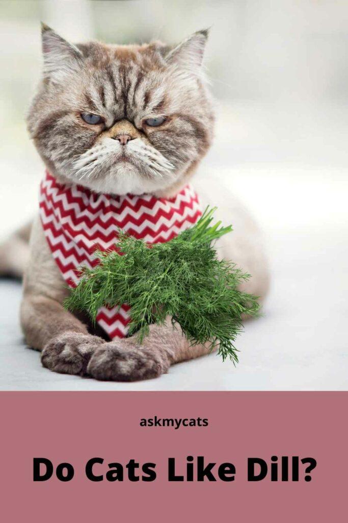 Do Cats Like Dill?