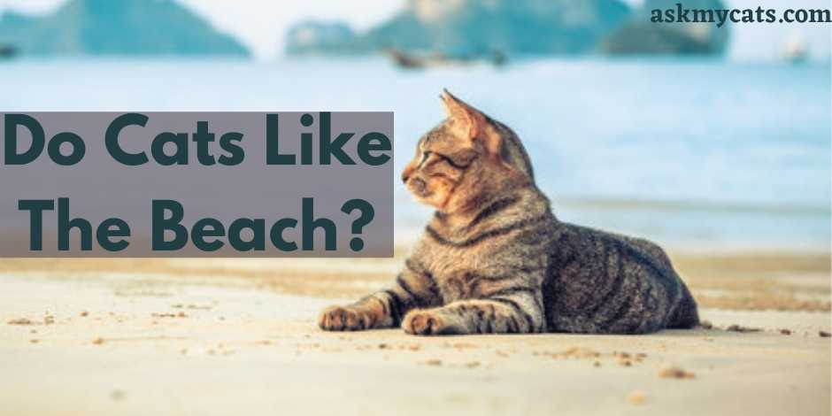 Do Cats Like The Beach?