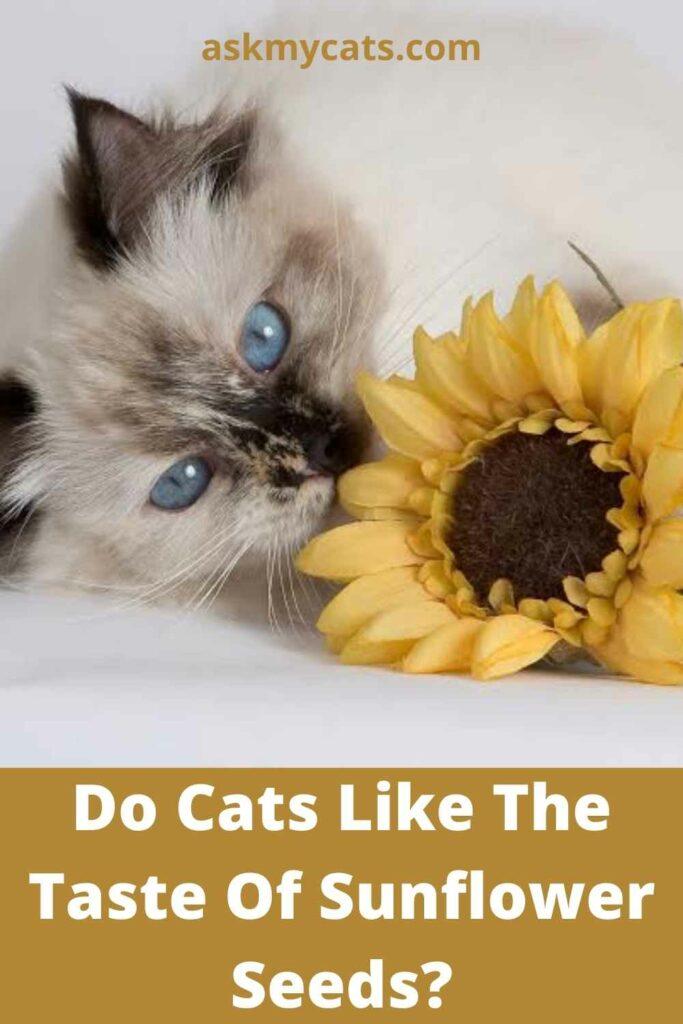 Do Cats Like The Taste Of Sunflower Seeds?