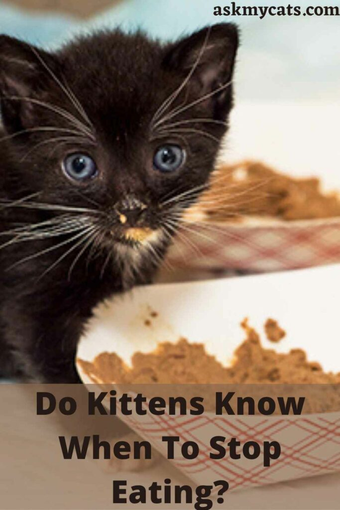 Do Kittens Know When To Stop Eating?